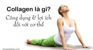 Collagen là gì